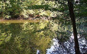 Seven Oaks Preserve
