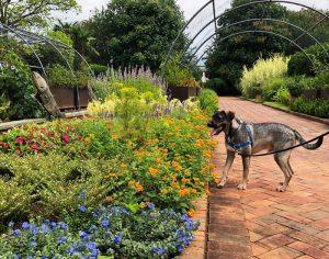 Pups and Perennials at Daniel Stowe Botanical Garden