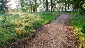A quiet lakeside trail at dawn in McLean